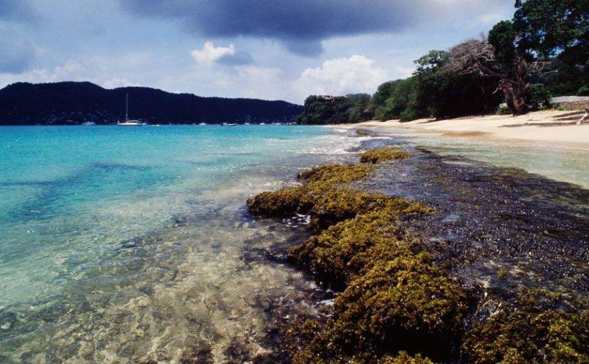 The sargassum crisis